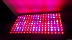 1200W 1000W LED Grow Light High Par Value LED Plant Light Medical Hemp Plant LED