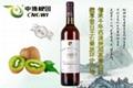 cheap wholesale Jin Zhuxia kiwi fruit