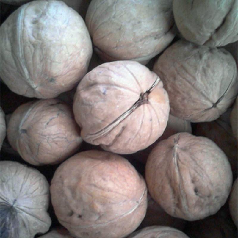 lowest price china inshell walnut  1