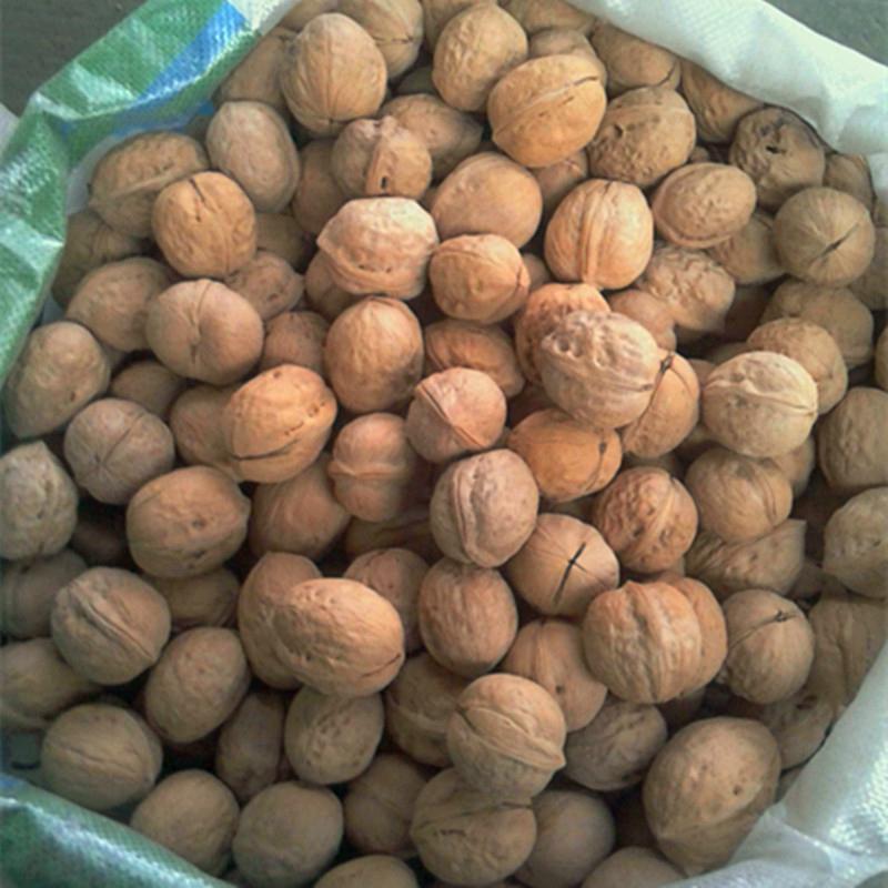 lowest price china inshell walnut  3