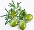 Oli-Ola™橄榄果提取物粉