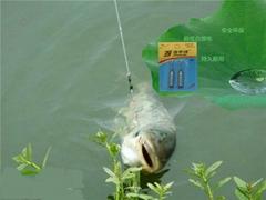 洁宇诗电子厂供应CR425电子浮漂电池