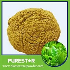 Green Tea Extract(Polyphenol,Catechins,EGCG)