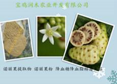 精細加工生產諾麗果粉 提取物粉 諾麗酵素粉