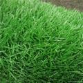 曲直绿色草皮楼顶人造草阳台人工