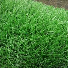 曲直绿色草皮楼顶人造草阳台人工草坪