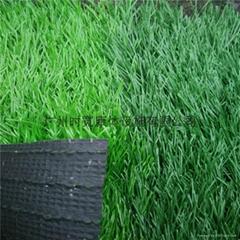 廣州時寬綠色足球場人造草坪