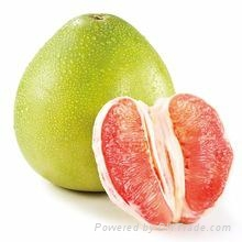 Red pulp pomelo