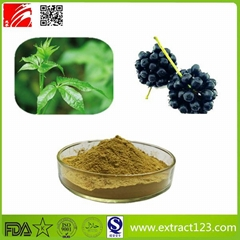 High Quality Siberian Ginseng Extract Powder