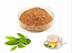 Instant Green Tea Extract Powder