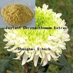 Instant Chrysanthemum Extract Powder