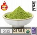 Free Sample Instant Organic Matcha Green
