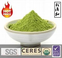 Free Sample Instant Organic Matcha Green Tea Powder