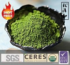 Organic Matcha Tea Powder Smoothie