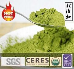 Finest Green Tea Matcha Latte