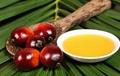 —Palm Kernel Oil