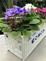 Maersk Container Flower Pot|Potted Container|Bonsai Container 4