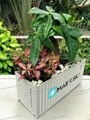 Maersk Container Flower Pot|Potted Container|Bonsai Container 5