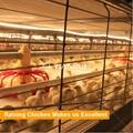 Tianrui Design Morden Automatic Broiler Chicken Cage For