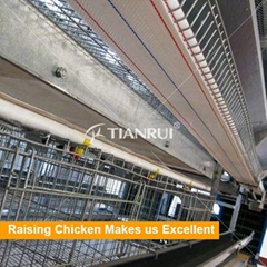H Type chicken layer cages with automatic feeding system