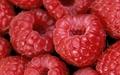 Red Raspberry 2
