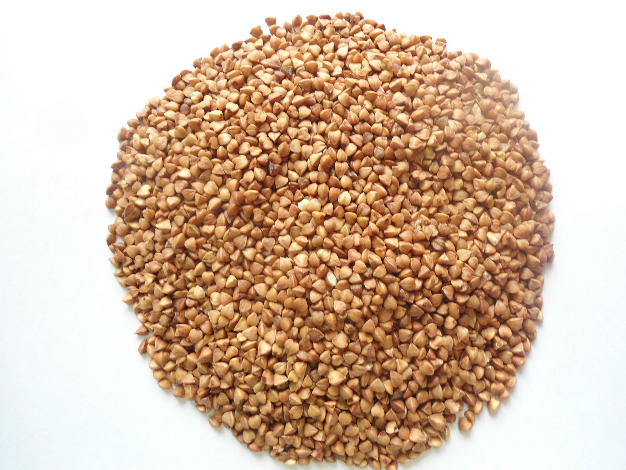 Buckwheat grain (instant) 1