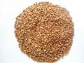 Buckwheat grain (instant)