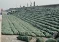 绿色针刺无纺布生态袋土工布生态
