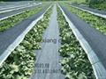 编织袋生产厂家促销黑色抗老化防