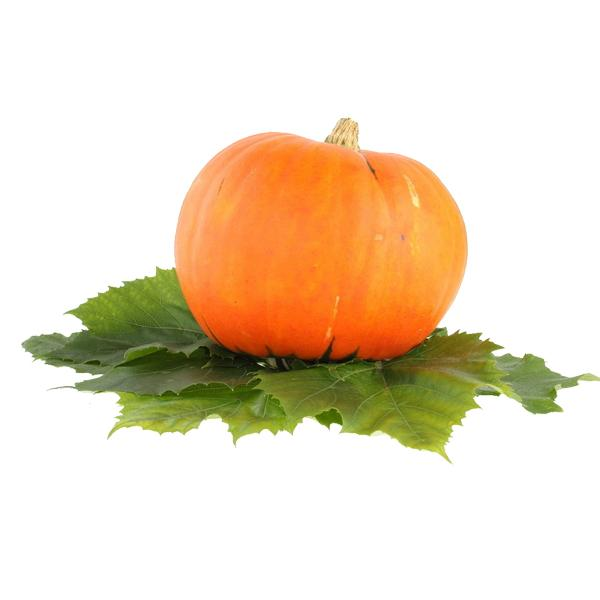 Pure Omega6 Pumpkin Seed Oil with High Edible Value and Medical Function  2