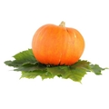 Pure Omega-6 Pumpkin Seed Oil with High Edible Value and Medical Function From C 2