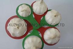 different size garlic