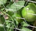 small hole galvanized chicken wire mesh