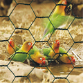 PVC coated Hexagonal chicken wire mesh