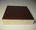 poplar core 12mm 15mm 18mm brown black film faced plywood