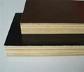 poplar core 12mm 15mm 18mm brown black film faced plywood
