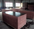 1250mmx2500mmm or 1220mmx2440mm Construction Film Faced Plywood
