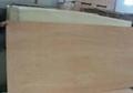 4' x 8' Poplar Veneer Sheet Marine Commercial Plywood