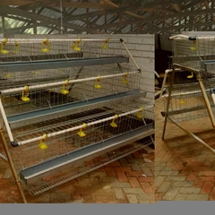 small chicken laying cage for egg chicken used in chickens