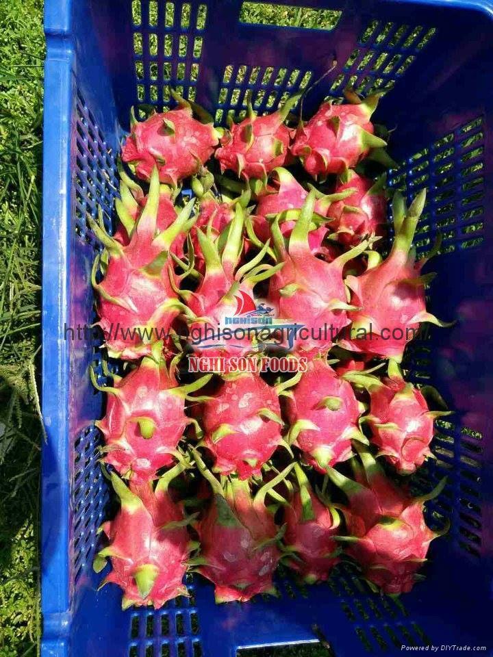 White flesh Dragon fruit (Pitaya) 1