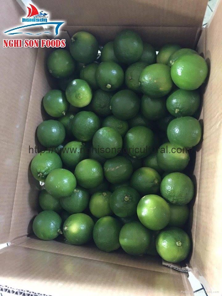 Fresh Seedless Lime/ Lemon 1