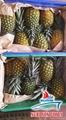 Fresh Pineapple 2