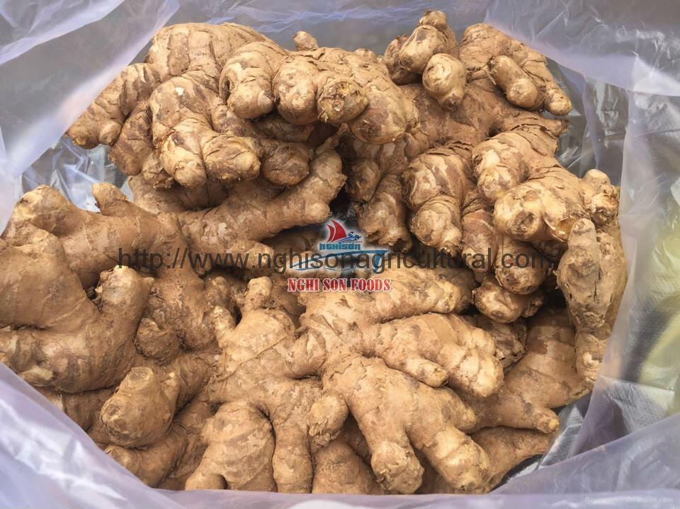 Fresh Ginger/ Fresh Young & Old Ginger 1