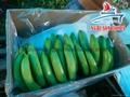 Cavendish Banana/ Green Banana premium quality 3
