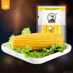 Vacuum Packed Sweet Corn Cobs Non-GMO