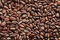 Sundried Organic Cocoa beans, powder