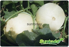 SutnodayIce Easy picking.early maturity