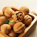 Thin-shell walnut 2