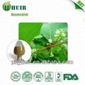 Resveratrol 98% Polygunom cuspidatum
