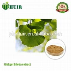 huir 100% naturalGinkgo Biloba Extract